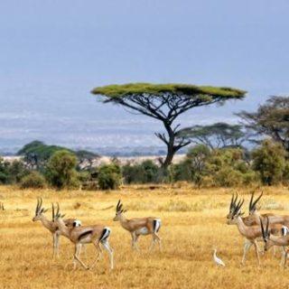 Kenia – Tansania deutschsprachig gefuehrte Studienreisen 2019 /2020  | Tinta Tours Erlebnisreisen