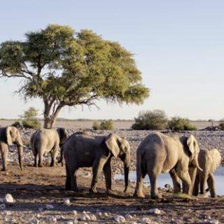 Namibia deutschsprachig gefuehrte Studienreisen 2019 /2020    Tinta Tours Erlebnisreisen