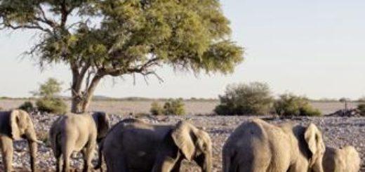 Namibia deutschsprachig gefuehrte Studienreisen 2019 /2020  | Tinta Tours Erlebnisreisen