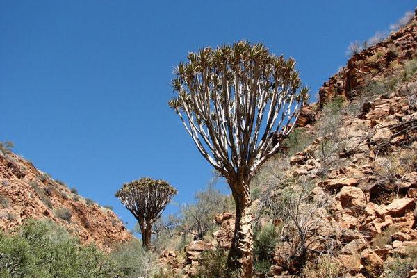 Namibia-Wandern-im-vielseitigen-Herzen-Namibias-Discover-Namibia-1