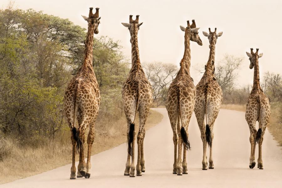 In drei Wochen entspannt durch Südafrika reisen