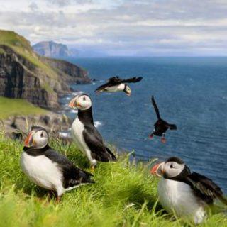 Färöer NaturStudienreise mit abwechslungsreichem Programm und mehreren herrlichen Wanderungen