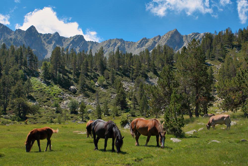 Pferdeweide im andorranischen Hochland - Andorra Turisme