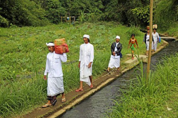 Durch Reisfelder auf dem Weg zum Tempel auf Bali