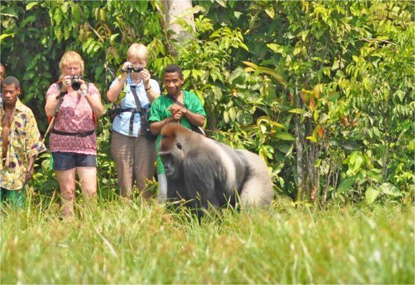 Gorilla-Tracking im Dzanga-Sangha NP