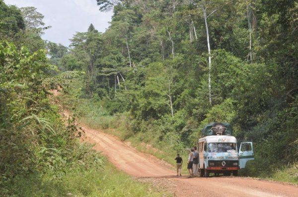 Auf dem Weg in die Wälder