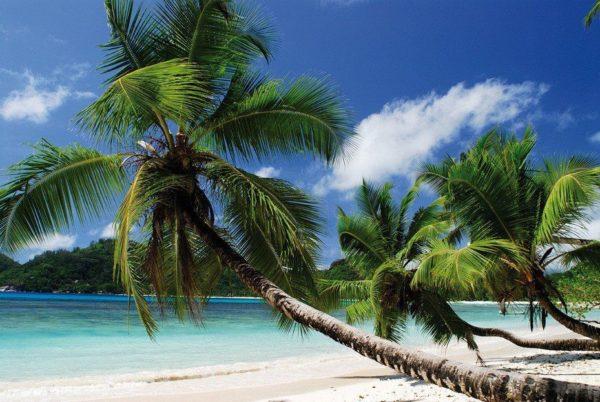Der Strand Ihrer Träume…