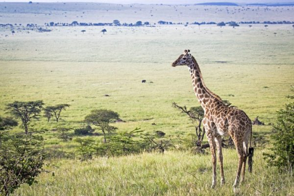 Kenia – Mutterland der Safari