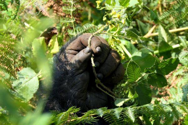 Gorillahand