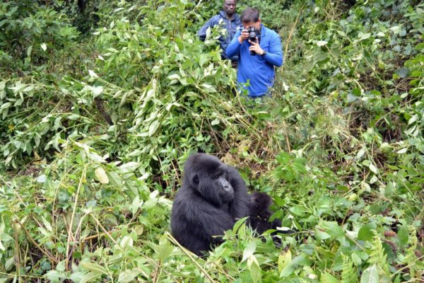 Erlebnis Gorilla-Tracking