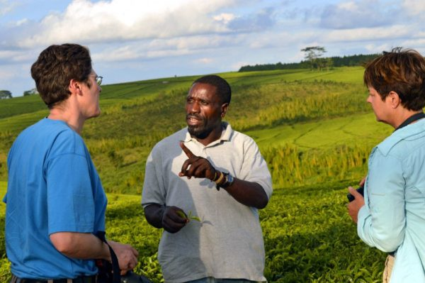 Tee-Tour in Südmalawi