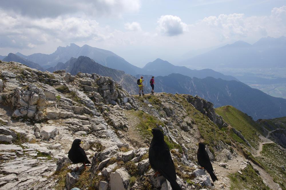 Auf der Reither Spitze (2.373 m) - Darek Wylezol
