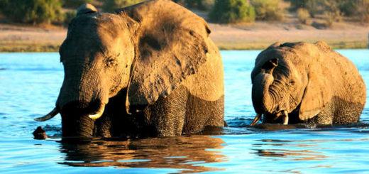 Begegnung im Chobe-Nationalpark - Alina Kirsten