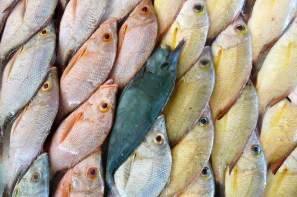 Fischmarkt in Französisch-Polynesien