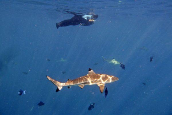 Unterwasserwelt Tahiti