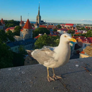 Blick auf Tallinn - Ina Wehner