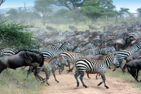 Serengeti-Migration - Juan Dobler