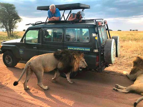 Löwen in der Serengeti - Alina Kirsten