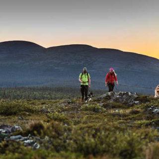 Huskywanderung - Harriniva Hotels & Safaris - © Harriniva Hotels & Safaris
