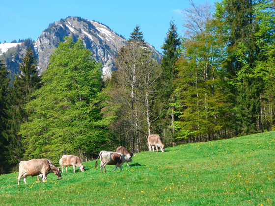 Bergwelten von Bad Hindelang - Andreas Happe