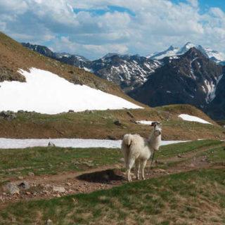 Andenbewohner in den Pyrenäen - Bettina Forst