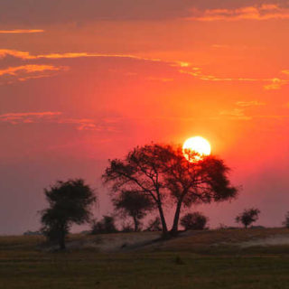 Sonnenuntergang im Chobe-NP - Lena Bohndorf