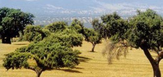 Kastilien – Andalusien deutschsprachig gefuehrte Studienreisen 2019 /2020  | Tinta Tours Erlebnisreisen