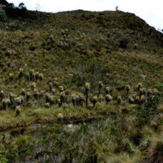 Geführte Rundreise mit Wandern Kolumbien