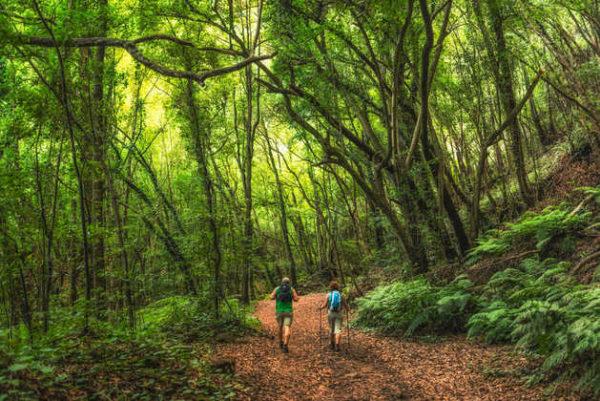 Wanderung im Lorbeerwald - Dominic Dähncke; - © Dominic Dähncke Photography