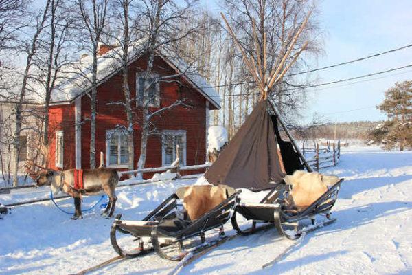 Rentierfarm Torassieppi - Susanne Gotthardt