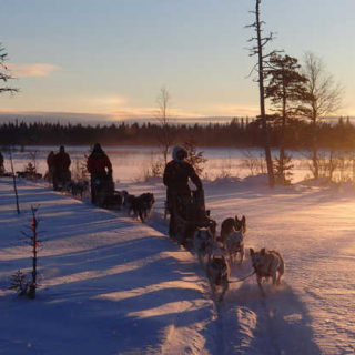 Mit dem Huskygespann unterwegs im Pyhä-Luosto-Nationalpark - Seifert