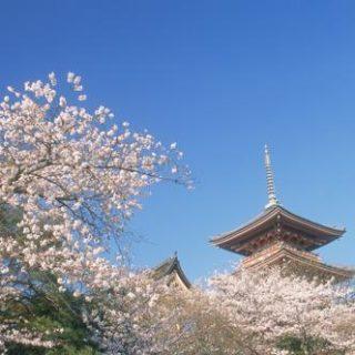 Kirschblüte Erleben Sie Japan zur Kirschblütenzeit und entdecken Sie quirlige Großstädte