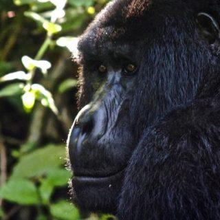 Ruanda Gruppenreise | Tinta Tours Erlebnisreisen
