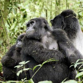 Uganda Studienreise zu den schönsten Nationalparks in Uganda