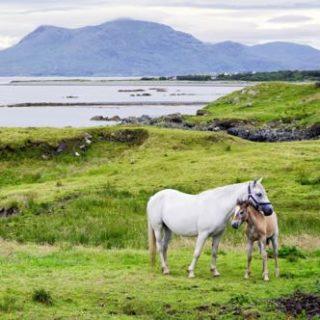 Irland Umfassende Studienreise nach Irland und Nordirland
