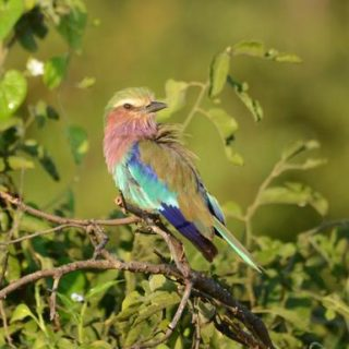 10-Tage-Adventure-Trip Botswana & Zimbabwe Safari   Erlebnisrundreisen.de
