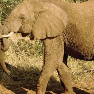 8-Tage-Adventure-Trip Kenya Safari Experience | Erlebnisrundreisen.de