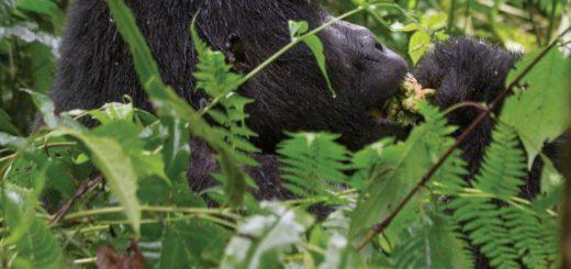 9-Tage-Adventure-Trip Rwanda & Uganda Gorilla Discovery | Erlebnisrundreisen.de