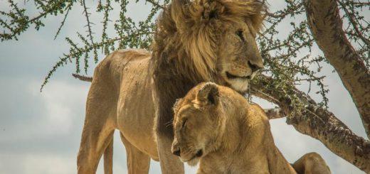 12-Tage-Adventure-Trip Wildlife Parks of Tanzania | Erlebnisrundreisen.de