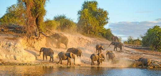 12-Tage-Erlebnisreise Botswana 2020/ 2021 | Erlebnisrundreisen.de