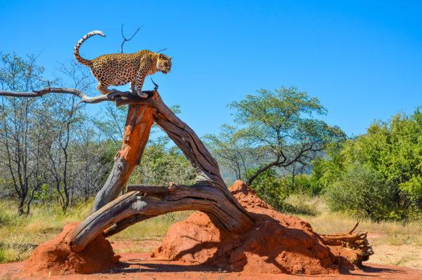 Facetten Namibias Erlebnisreise - 2020 / 2021 | Tinta Tours Erlebnisreisen