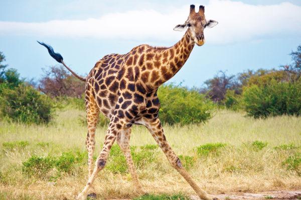Tinta Tours Erlebnisreisen - Gruppenreise Namibia 2020 / 2021