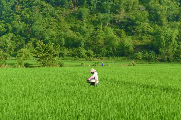 Vietnam auf einen Blick-und Meer Erlebnisreise - 2020 / 2021 | Tinta Tours Erlebnisreisen