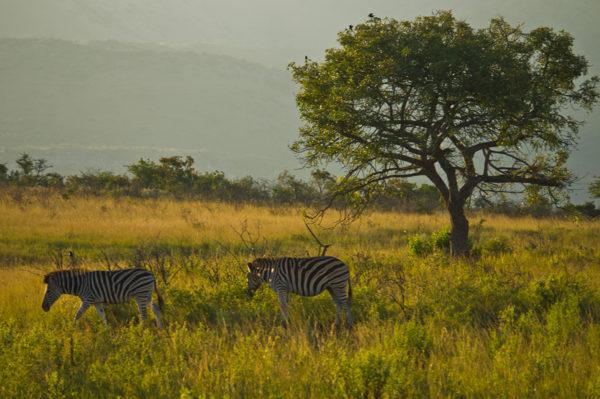 Tinta Tours Erlebnisreisen - Gruppenreise Südafrika 2020 / 2021
