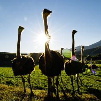 Südafrika Gruppenreise für Alleinreisende 2020 / 2021