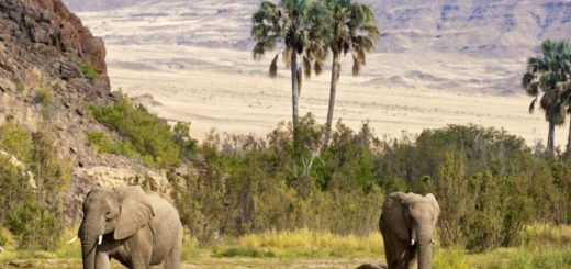 2 Wüstenelefanten Reise 2 Wüstenelefanten 2020/2021