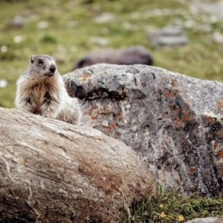 Nationalpark Hohe Tauern - naturnah entdecken Gruppenreise 2020/2021 Tirol