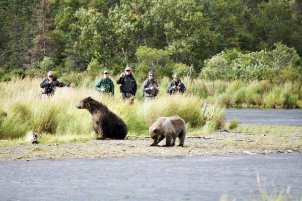 Katmai Brooks Bären am Fluss