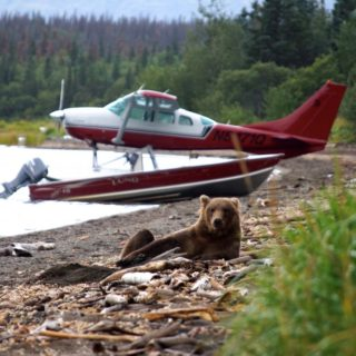 Alaska-Bär-und-Wasserflugzeug-in-Alaska 2021 | Erlebnisrundreisen.de