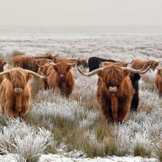 Hogmanay - Jahreswechsel in den schottischen Highlands Gruppenreise 2020/2021 Schottland